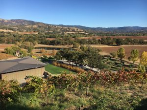 Saracina Vineyards: Learn About Mendocino Wine (VIRTUAL WINE TASTING)