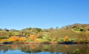 Saracina Vineyards: Learn About Mendocino Wine (VIRTUAL WINE TASTING)